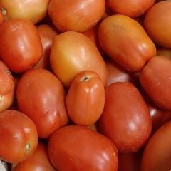 Tomate allongée bio - 1 kg