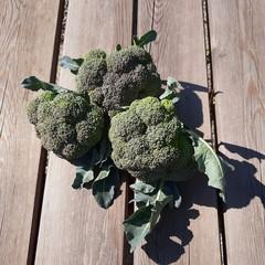 Chou brocoli bio à l'unité