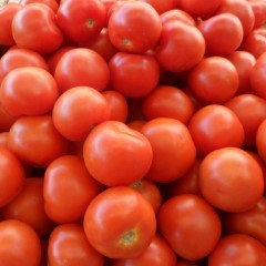 Tomate ronde bio - 1 kg