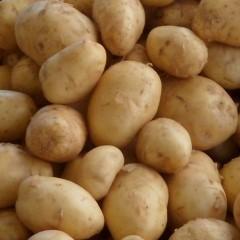 Sac filet de pommes de terre bio - 5 kg